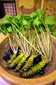 wasabi-plant1